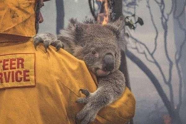 Avustralya neden yanıyor? / Erdinç OZAN