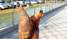 Ankara'da kuru ağaçlar sanat eserine dönüşüyor