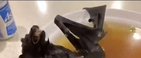 Dünyayı korkutan virüsün kaynağı 'yarasa çorbası'