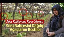 1500 kızılçam ağacının kesildiğini ortaya çıkaran kadının serasını yıktılar