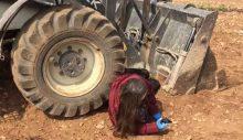 Rektör yerli tohum üretilen tarlayı dozerle talan etti