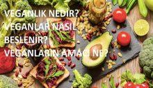 Vegan Sanat, Ankara sokaklarında haftanın üç günü sorularınızı yanıtlıyor