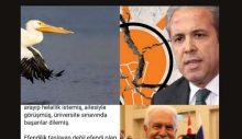 Şamil Tayyar'ı Pelikancılar mı yedi, Perinçek mi; yoksa son mesajı mı?