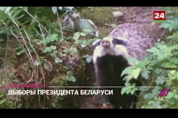 """Belarus'un """"penguen belgeseli"""""""