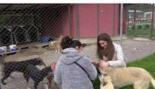 """""""Çav Bella"""" hakaretleri sokak hayvanlarına mama oldu"""