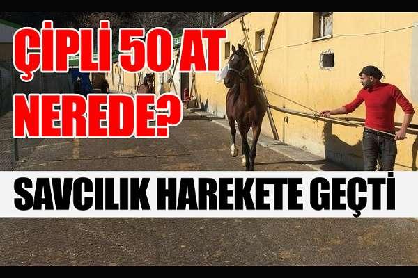 İBB'nin MHP'li belediyeye hibe ettiği atlar kayıp!