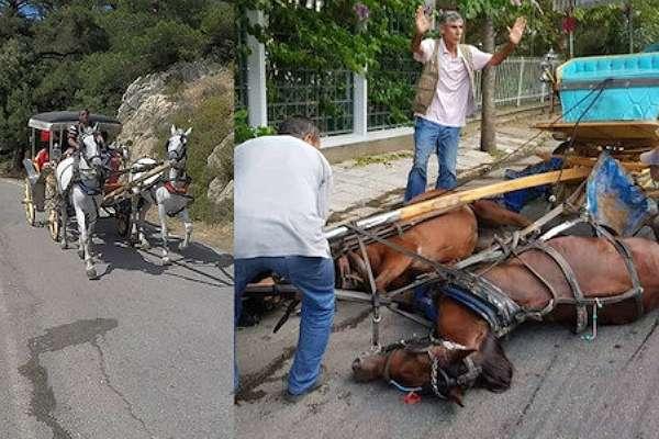 İmamoğlu'ndan Erdoğan'a çipli atlarla ilgili karşı hamle!